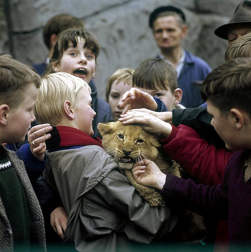 Фото животных из зоопарка на руках