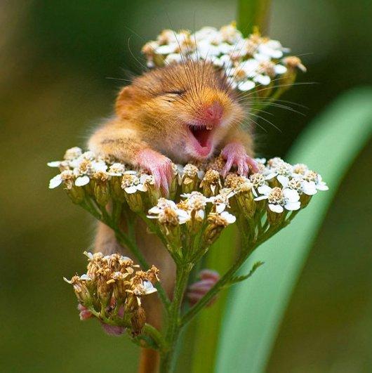 счастливые животные на фото 2