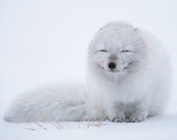 счастливые животные на фото 10