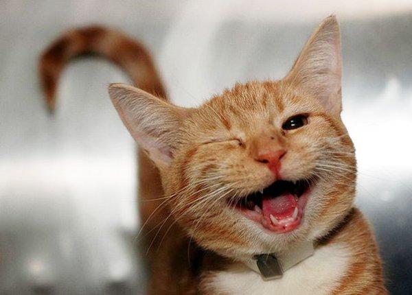 счастливые животные на фото 22