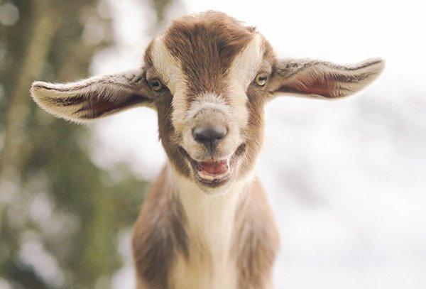 счастливые животные на фото 26