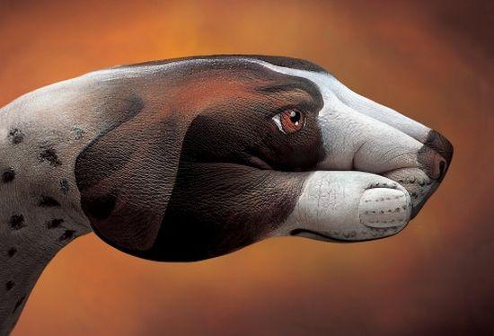 Фото животных из рук 13