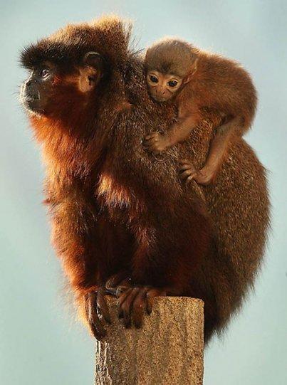 Детеныши животных – 31