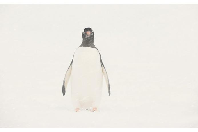Фото Антарктиды 9 – Фотограф Алекс Бернаскони