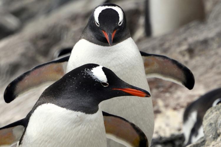 Фото Антарктиды 21