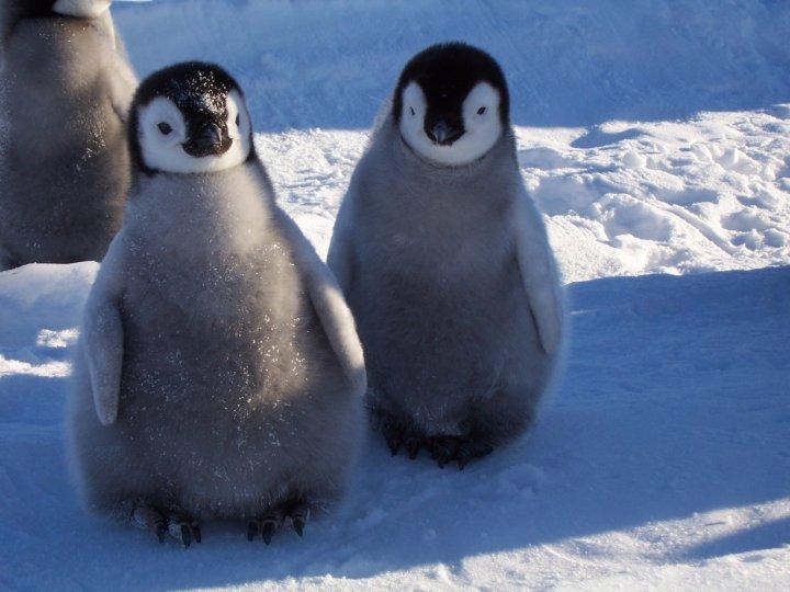 Фото Антарктиды 25