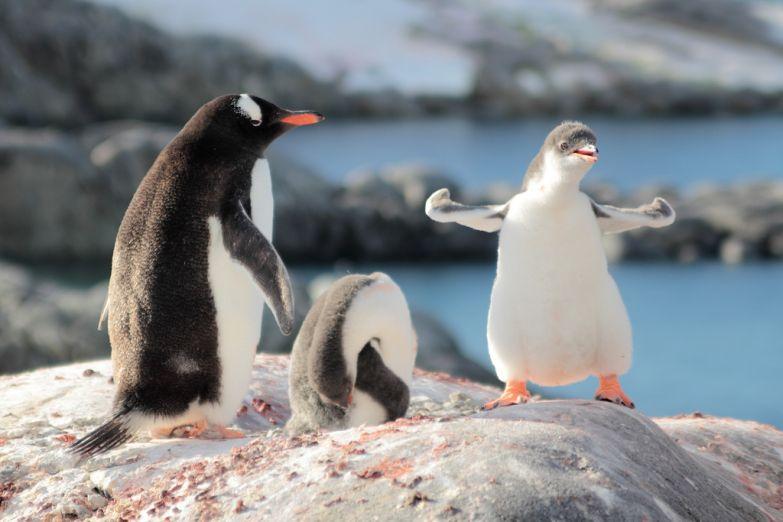Фото Антарктиды 29
