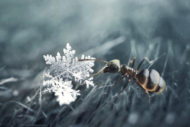 сегодня снова падал снег) Автор фото: Анна Чернобай