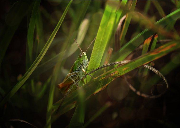 Елена Elena – фото насекомых
