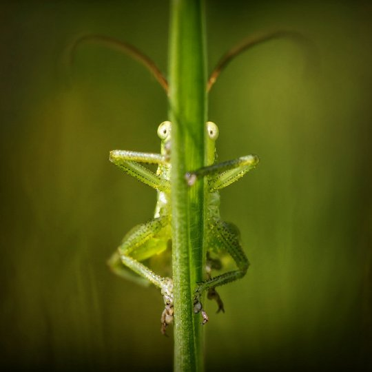 Евгений Кутузов – фото насекомых