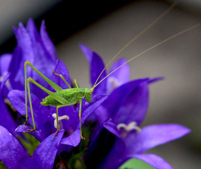 Елена Ахромеева – фото насекомых