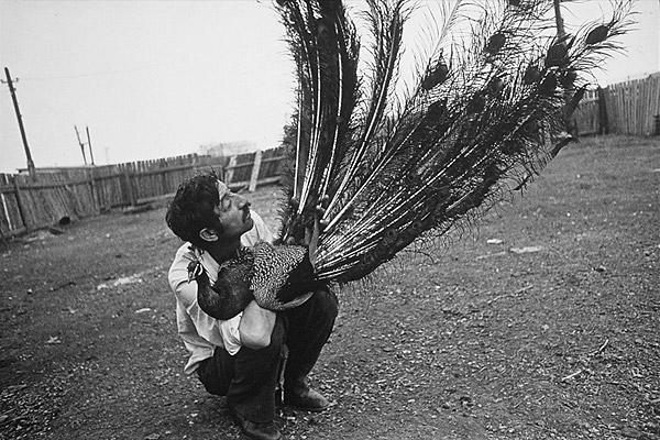 работы известных фотографов мира 16