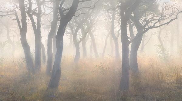 Великолепие пейзажной съемки в творчестве Марка Адамуса - №20
