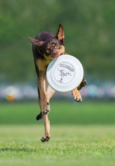 Летающие собаки Клаудио Пикколи - №11