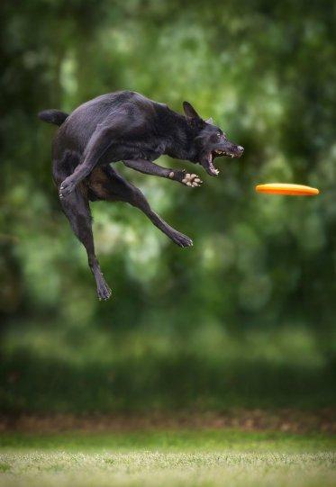Летающие собаки Клаудио Пикколи - №17