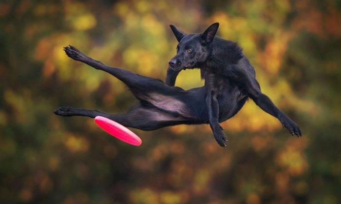Летающие собаки Клаудио Пикколи - №3