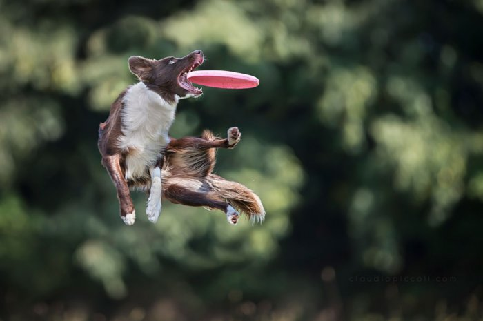 Летающие собаки Клаудио Пикколи - №5