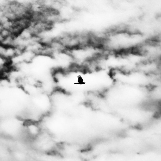 Классика черно-белой фотографии Бенуа Курти - №8