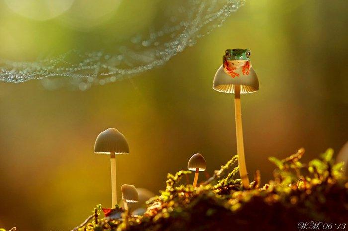 Заманчивый мир лягушек в макрофотографии Уила Мийера - №12