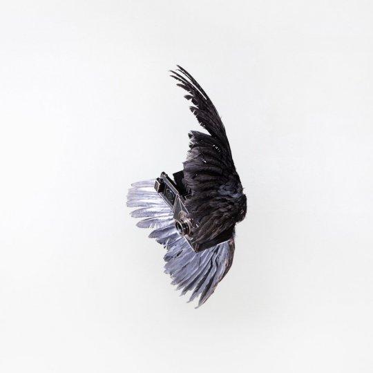 Летающие птицы-фотокамеры Пола Октавиуса - №5