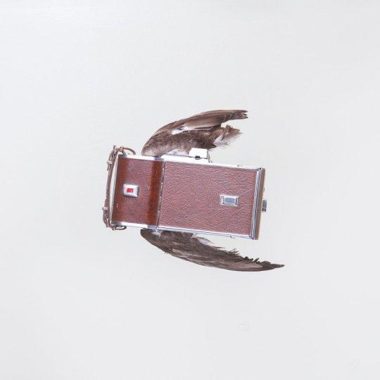 Летающие птицы-фотокамеры Пола Октавиуса - №9
