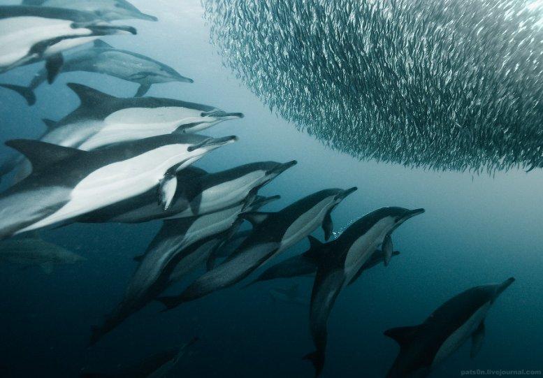 Потрясающие подводные фотографии Александра Сафонова - №8