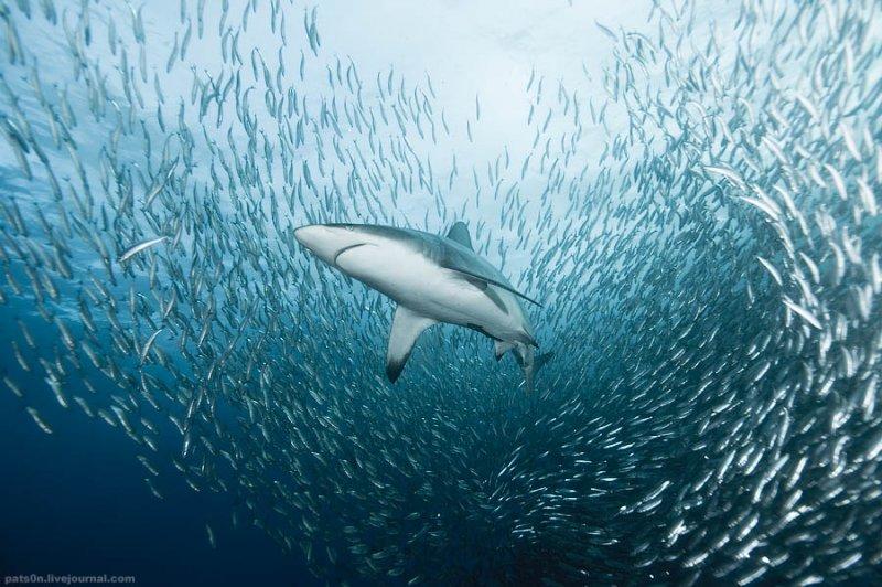Потрясающие подводные фотографии Александра Сафонова - №6