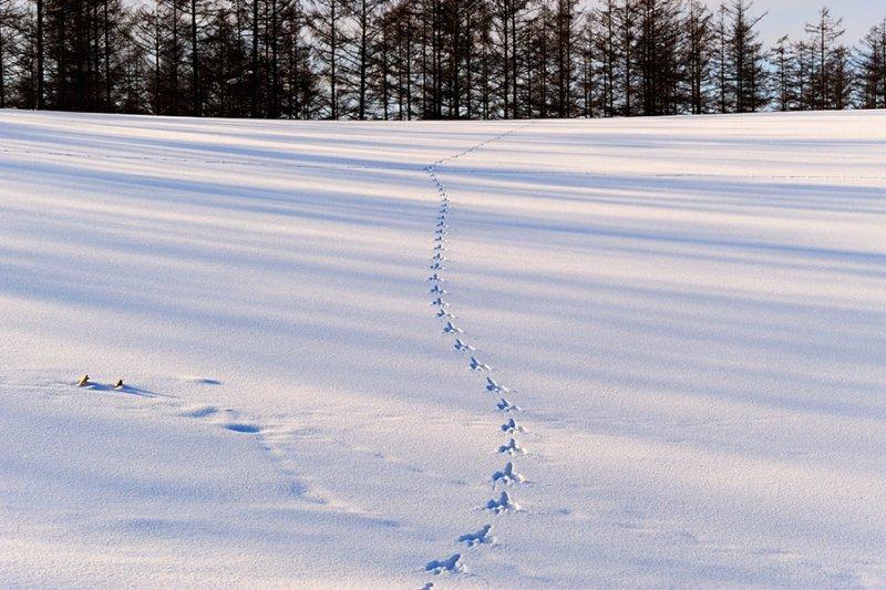Ландшафтная сказка в фотографиях Кента Шираиши - №17
