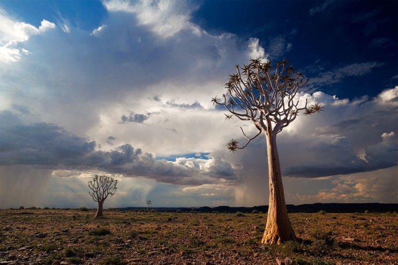 Фантастическая Намибия в объективе Хоугарда Малана - №16