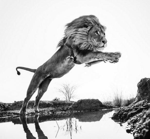 Фотограф David Yarrow - №11