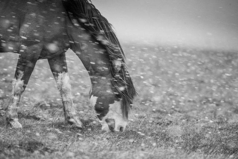 Фотограф Eliseo Miciu - №13