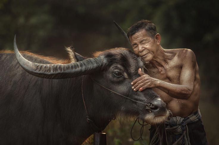 """""""Азия"""" в фотографиях Jakkree Thampitakku - №2"""