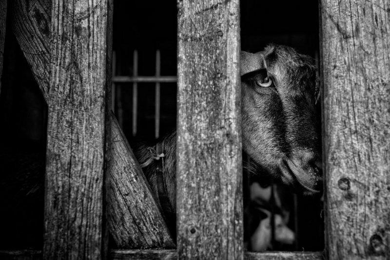 Итальянский фотограф Раффаэле Монтепаоне - №9