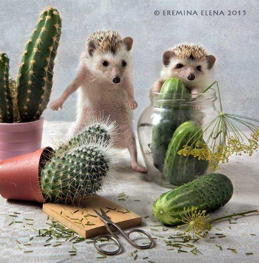 Фотограф Елена Еремина - №11