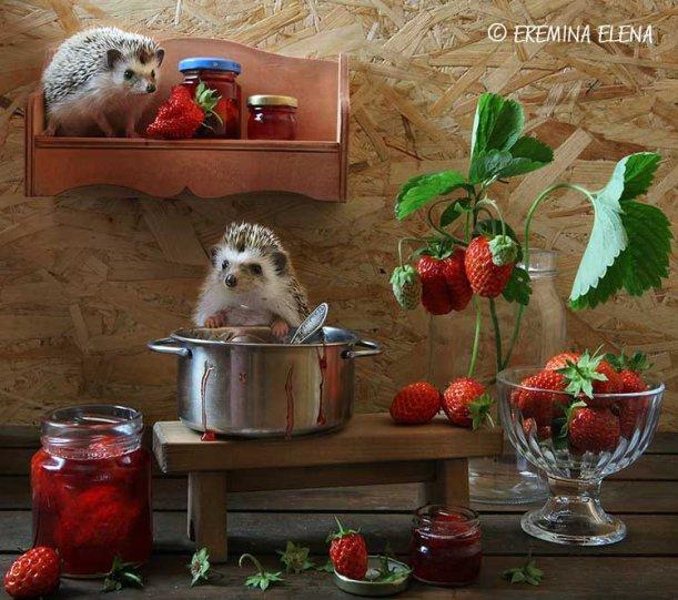 Фотограф Елена Еремина - №24