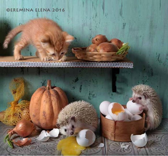 Фотограф Елена Еремина - №28