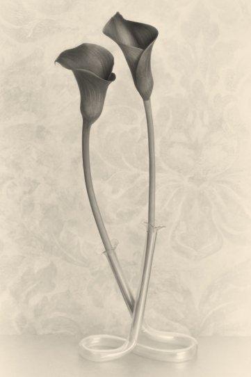 Фотограф Уильям Кастеллана - №23