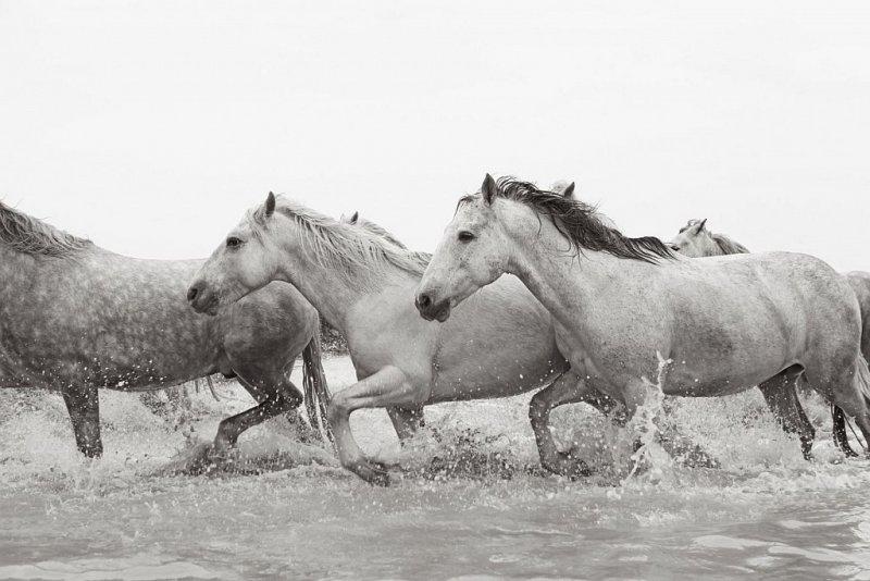 Фотограф Дрю Доггетт - №6