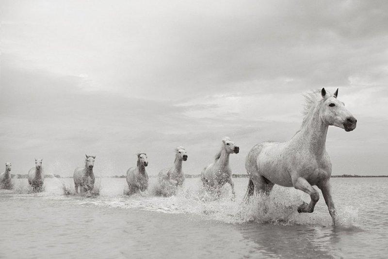 Фотограф Дрю Доггетт - №14