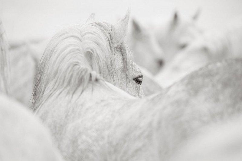 Фотограф Дрю Доггетт - №22