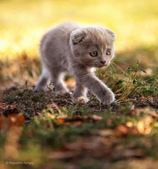 Портреты животных от фотографа Сергея Полюшко - №20