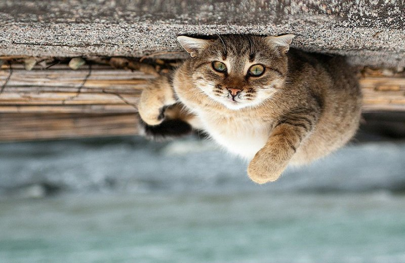 Портреты животных от фотографа Сергея Полюшко - №10