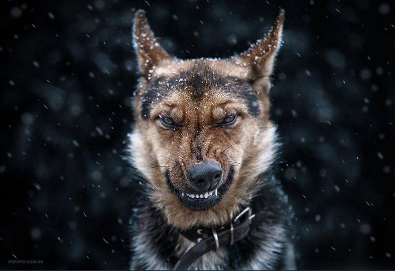 Портреты животных от фотографа Сергея Полюшко - №1