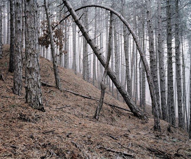 Фотограф Даниэль Коваловский - №5
