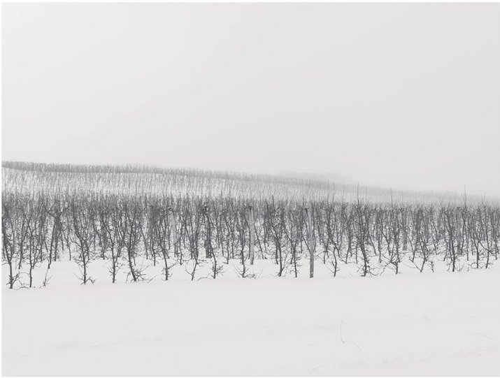 Фотограф Йозеф Хофленер - №16