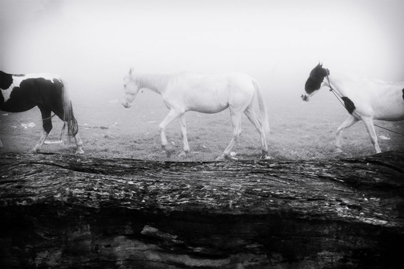 Фотограф Канишка Мукерджи. - №15