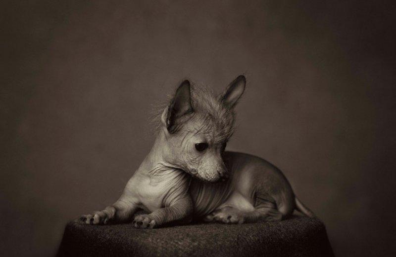 Фотограф Винсент Лагранж - №10