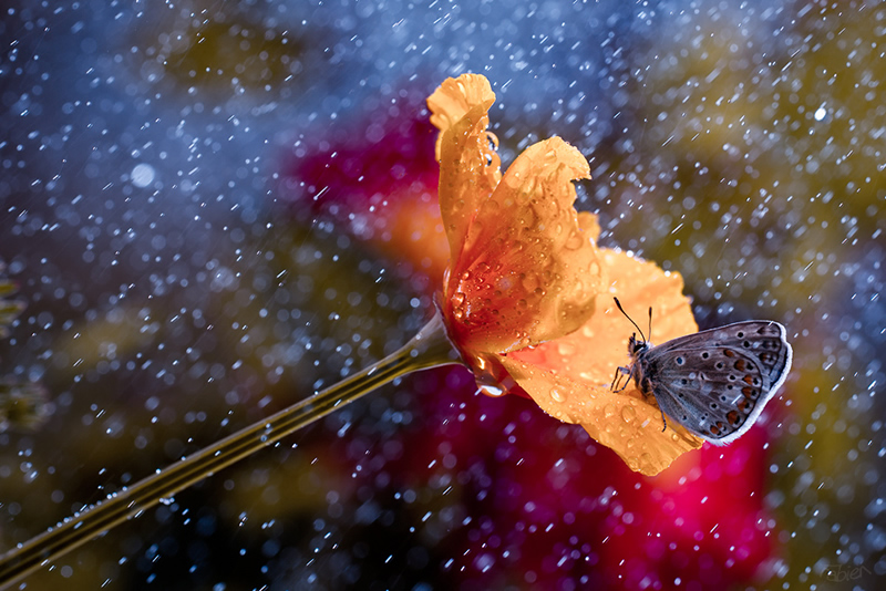 Макрофотография от Фабьена Бравина - №4