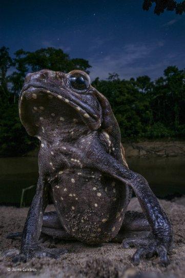 Автор фото: Хайме Кулебрас. «Жаба в позе»