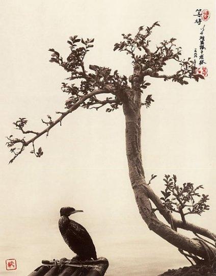 Фотограф Дон Хонг-Оай - №25